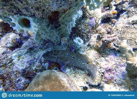 grouper coral reef amongst sitting fish underwater groupers bonaci mycteroperca called known which names caribbean