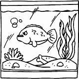 Fisch Fieser Aquarium Malvorlage Ausmalbild Ausmalbilder Weitere Malvorlagen sketch template