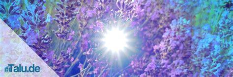 Gewürz Lavendel Pflege by Lavendel Pflege In Garten Und Topf Talu De