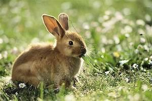 Kaninchenkäfig Für 2 Kaninchen : erfolg f r kaninchen schutz eu parlament fordert ende der qu lerischen k fighaltung sven ~ Frokenaadalensverden.com Haus und Dekorationen