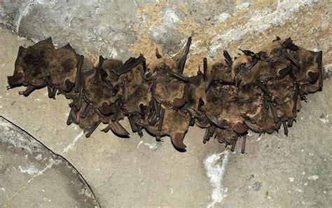 bat and moth wrangell st elias national park