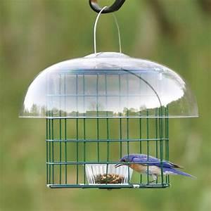 Bluebird Mealworm Feeder Copper Bluebird Mealworm Feeder
