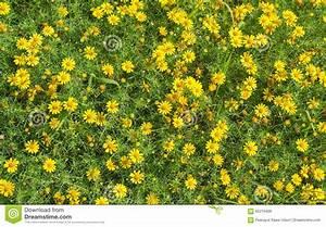 small bouquet of yellow flowers royalty free stock photo With tapis chambre bébé avec fleur de bouquet