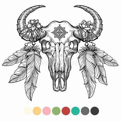 Skull Animal Bison Vector Head Coloring Illustration
