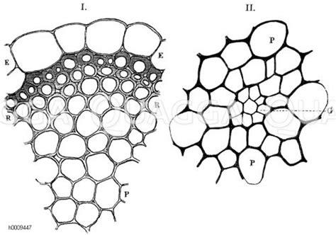 Mikroskopie Archives  Seite 4 Von 4