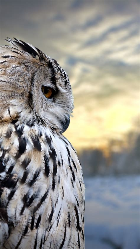 Owl Phone Wallpaper by Owl Iphone Wallpapers Top Free Owl Iphone Backgrounds