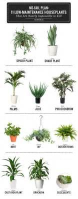 best 25 plants ideas on pinterest plants indoor house