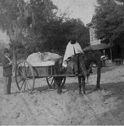 Animated African Chubachus Horse Drawn Florida Gainesville