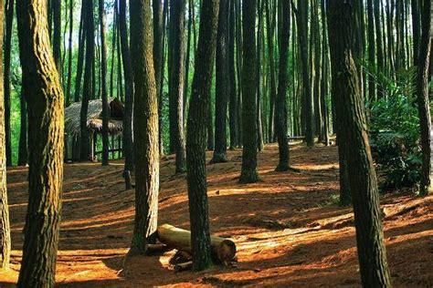 harga tiket masuk hutan pinus mangunan tempat wisata