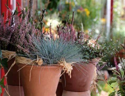 Herbst Winterbepflanzung Garten by H 252 Bsche Balkonpflanzen F 252 R Die Kalte Jahreszeit