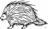 Porcupine Coloring Pages Clipart Clip North Cliparts American Printable Sheets Library Animal Template Drawing Porcupines Cute Supercoloring Dot Cartoon Sketch sketch template