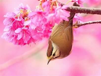 Desktop Birds Bird Wallpapers Animals Flower Pretty