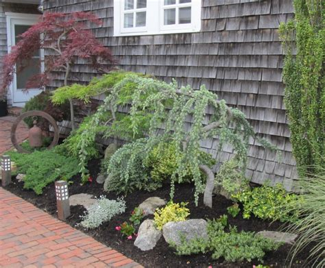 small landscape plants ornamental trees plant is too close planting
