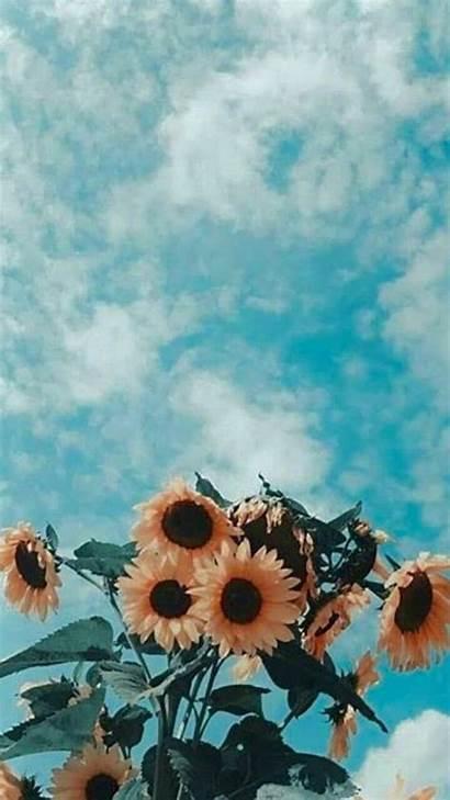 Summer Wallpapers Aesthetic Pastel Aesthetics Flowers Iphone