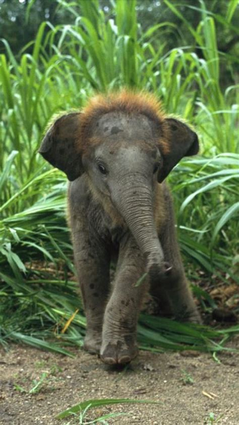 Baby Jungle Animals Wallpaper - nature jungle animals elephants rainforest baby elephant