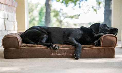 1000 images about pets on pinterest for dogs antler