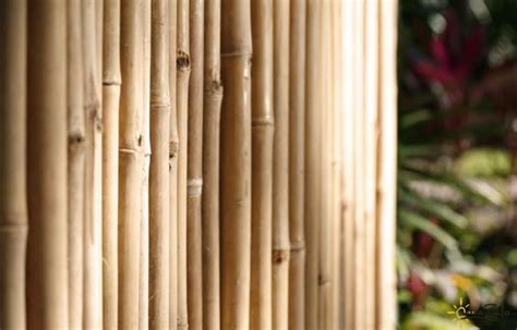 bamboo fencing rolls decorative screens an alternative to chain link fencing 4294