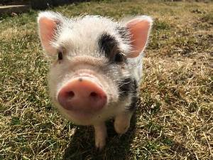 Interview With Apache Pig  Theory And Practical Guide