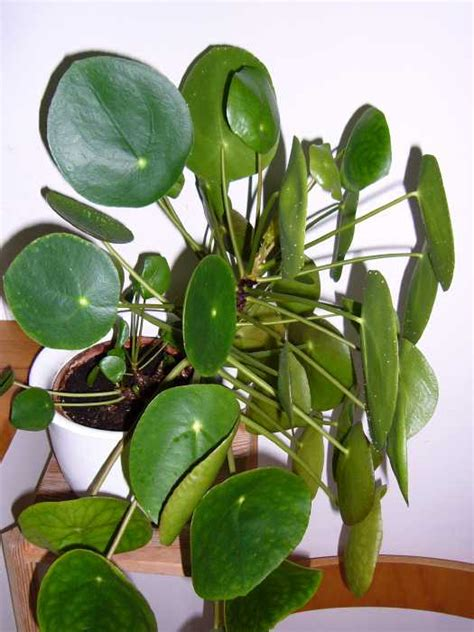 Wie Heißt Meine Zimmerpflanze by Zimmerpflanze Mein Sch 246 Ner Garten Forum