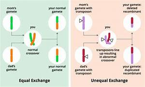 Read  U0026 Download Genetic Recombination