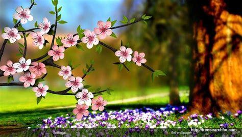 desktop wallpaper hd  full screen flowers  visit  site  full size desktop wallpaper