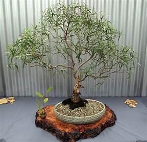 Eucalyptus Plante D Intérieur : plantes d 39 int rieur parfum es une s lection s duisante ~ Melissatoandfro.com Idées de Décoration