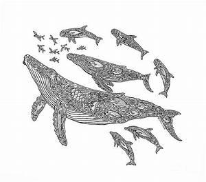 Hawaiian Humpbacks Drawing by Carol Lynne - Hawaiian ...