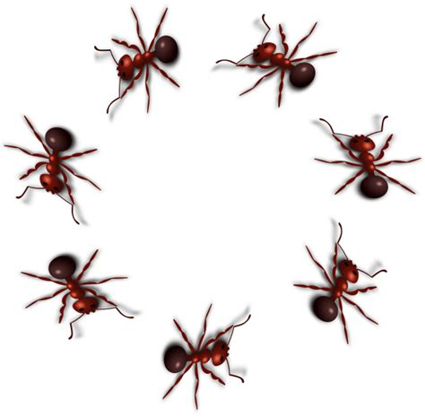 Ant Png Photo  Png Mart