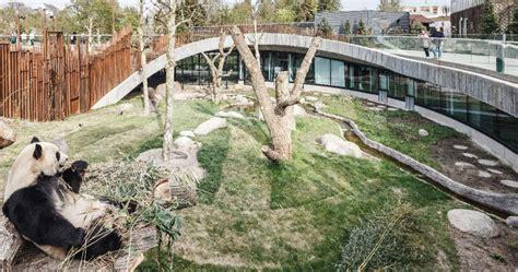 bjarke ingels groups panda house opens  copenhagen zoo
