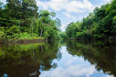 floresta amazonica um lugar  visitar ao menos uma vez
