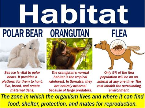 Animal habitats for kidsview schools. Habitat - definition and meaning - Market Business News