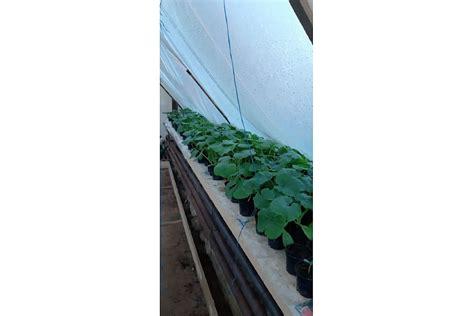 Dārzeņu audzēšana