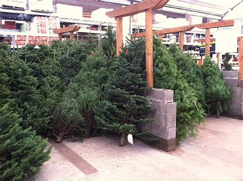 home depot live christmas trees for sale shopping with mavis 21 packets of seeds for 0 15 at the home depot one hundred dollars a month