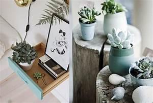 les succulentes des plantes tres deco joli place With chambre bébé design avec plante bach