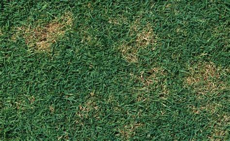 Braune Pilze Im Garten Bilder by Pilze Im Rasen Rasenkrankheiten Bek 228 Mpfen Mein Sch 246 Ner