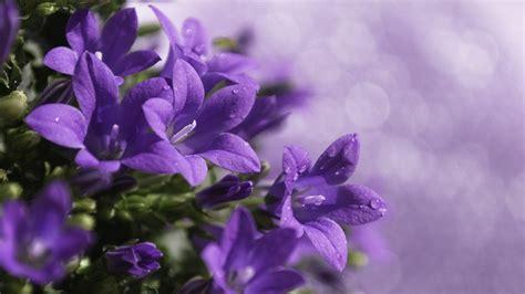 Purple Flower Backgrounds Wallpaper Cave