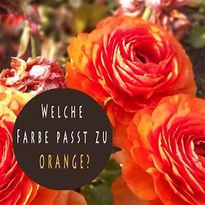 Welche Wandfarbe Passt Zu Kernbuche : welche farbe passt zu orange farbkombinationen ~ Watch28wear.com Haus und Dekorationen