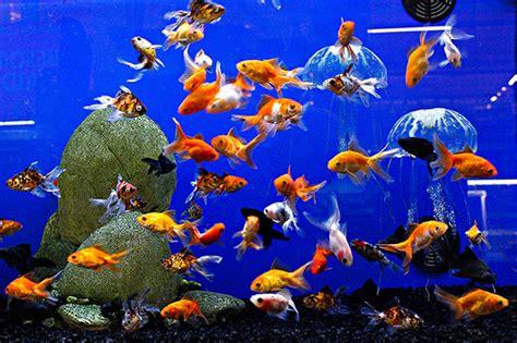 animaux vivants poissons silolux c3f proagri