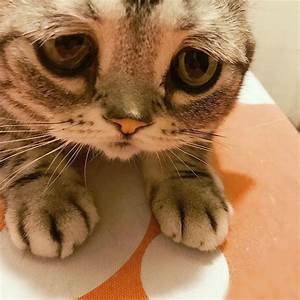 Meet Luhu, The Saddest Cat In The World Whose Photos Will ...