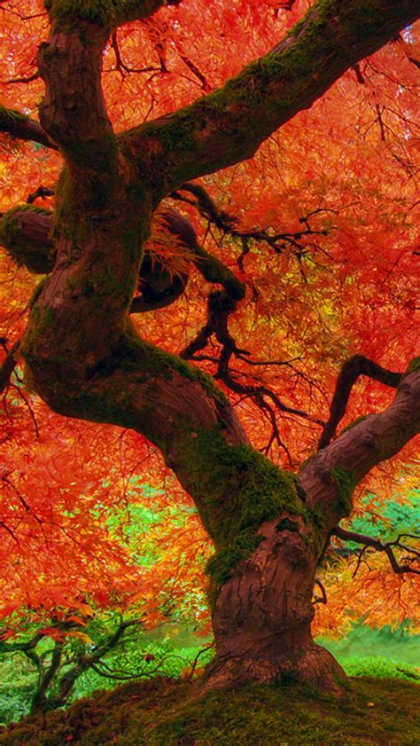 Iphone 11 Wallpaper Hd Autumn by Fall Wallpaper For Iphone Wallpapersafari