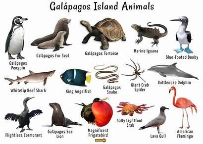 Galapagos Animals Islands Land Facts Animalspot