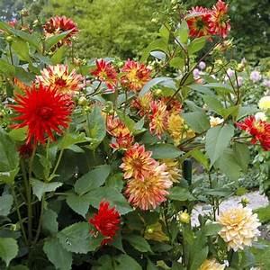 Plante Balcon Facile D Entretien : plante fleurie d 39 ext rieur liste ooreka ~ Melissatoandfro.com Idées de Décoration