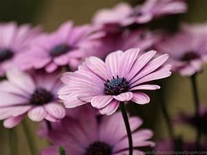 Purple Flowers Wallpapers