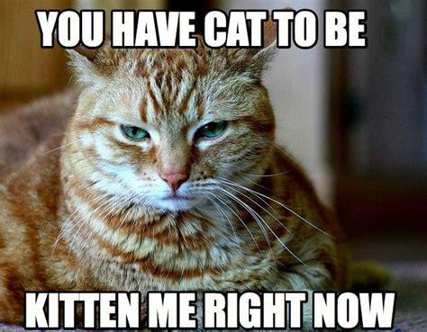 Animal Pun Meme - 15 animal puns ewe can t live without puns animal puns and kittens