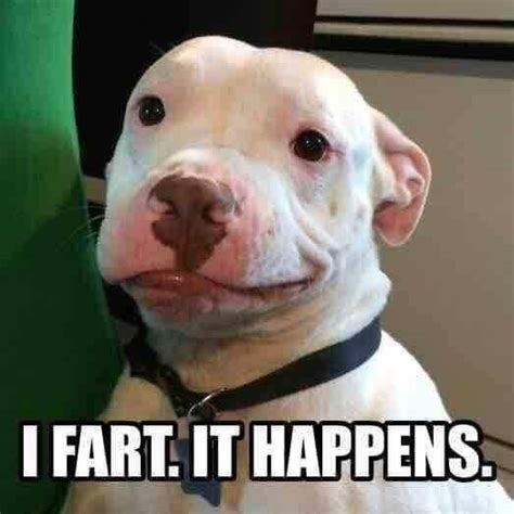 Pitbull Puppy Meme - 10 funny pit bull memes petanimalguide com