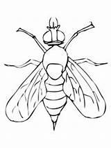 Fly Mosca Coloring Drosophila Colorear Colorare Disegno Disegni Printable Colorir Dibujos Fruit Moscerino Desenhos Frutta Pintar Ausmalbilder Dibujo Kolorowanki Fruta sketch template