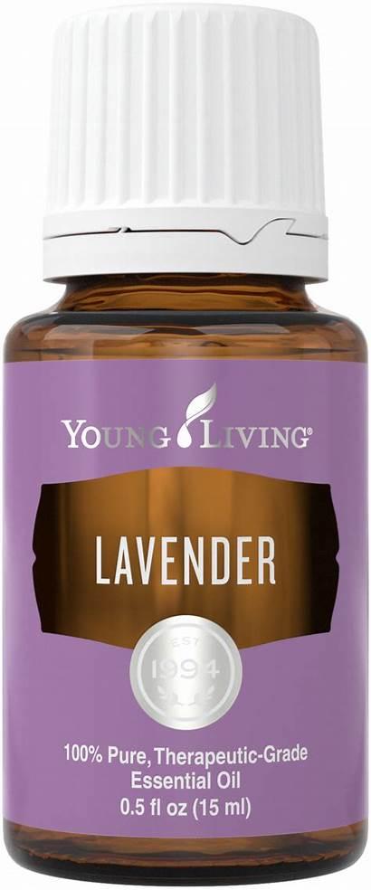 Lavender Oils Libido Lucy