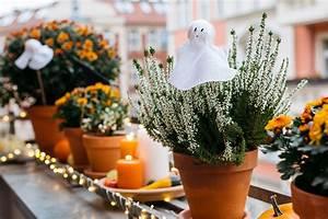 Küche Dekoration Selber Machen : halloween dekoration mit blumen selber machen you and i diy ~ Bigdaddyawards.com Haus und Dekorationen
