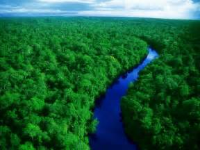 Green Amazon Forest 1024x768 Wallpapers,Amazon Forest 1024x768 ...
