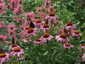 Blumen Für Sonnigen Standort : stauden blumen steingarten stauden mix steingartenstauden ~ Michelbontemps.com Haus und Dekorationen